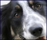 susan-matcham-dog-listener